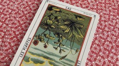 Tarot égyptien - Eau - Les Plantes carte 3 renversée